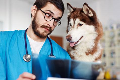 Veterinary Clinics & Hospitals Equipment